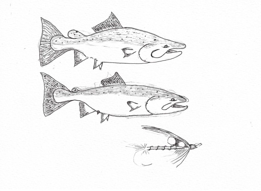 Chinook buck and hen sketch example: getting close.