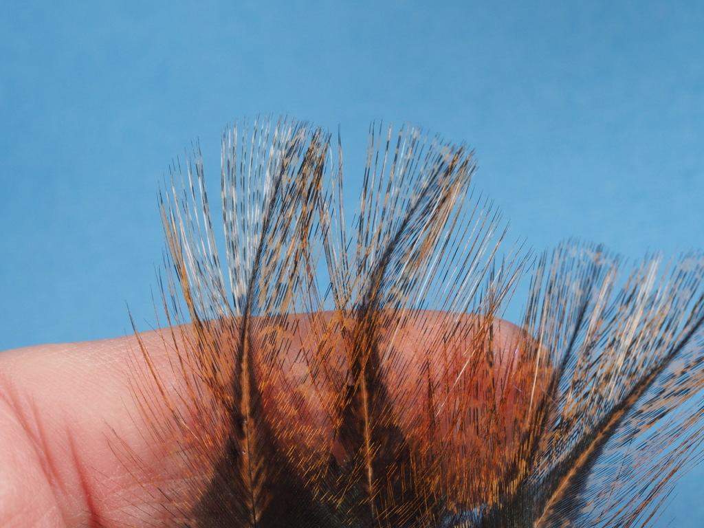 This is my tail materialCoq de Leon Feathers. These are beautifully marked. I only need three fibers for the tail. This doesn't sound like much, but it is plenty.