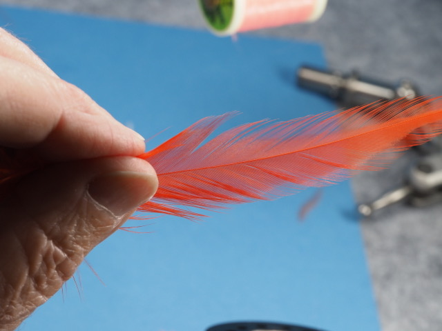 this is a hot orange schlappen feather Iwill use to wind a collar on this fly. I picked out a feather that has nice soft web at the base of the hackle stem.